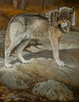 Andrée Marcoux, Le loup de Montebello